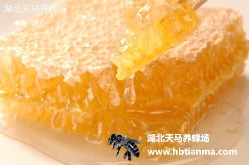 巢蜜-养蜂场自产自销产品-图片展示厅-湖北天马养蜂场