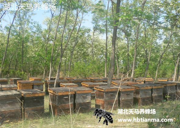 湖北天马养蜂场-蜂产品-养蜂场图片