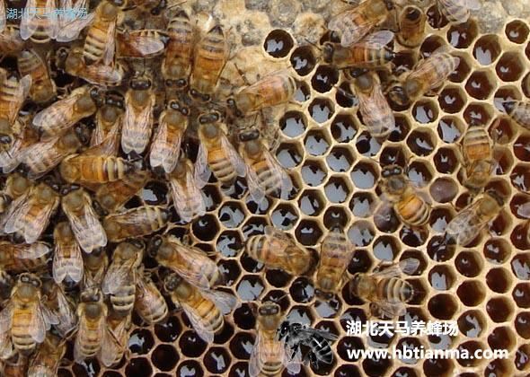养生警惕:揭示三个错误的蜂蜜辨真假方法