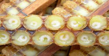 蜂王浆的介绍