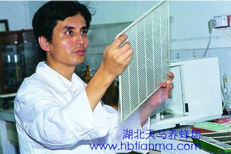 20121203生活早参考:繆晓青讲蜂毒的作用