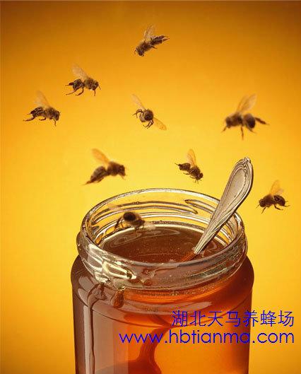 蜂蜜醋水减肥法