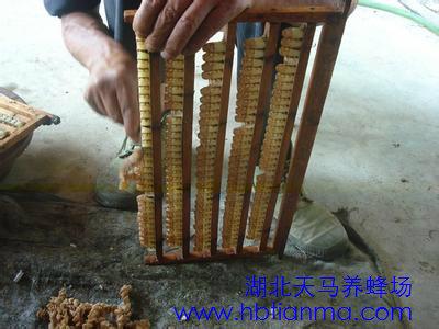 蜂王浆有什么神奇之谜是高级补品吗?