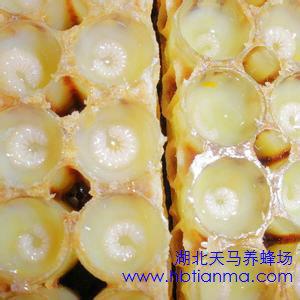 蜂王浆的副作用8类人群食用需谨慎