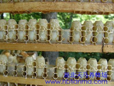 蜂王浆怎么吃冬季补肾防病必食
