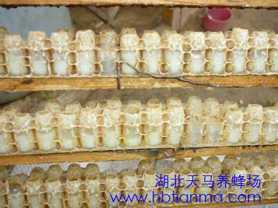 蜂王浆胶囊的作用与功效