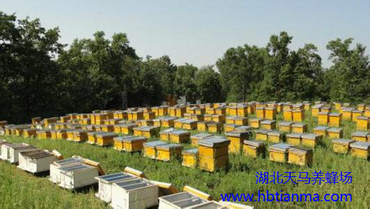 采收蜂蜜的操作步骤有哪些?