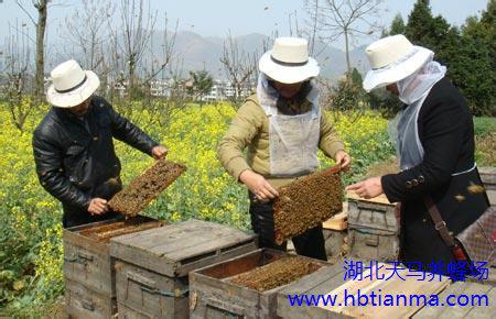 贺子固-北平民生养蜂讲习所