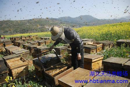 蜂毒质量标准