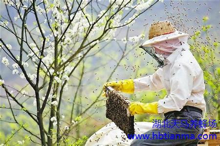 怎样处理患下痢病的越冬蜂群?