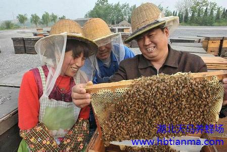 蜂蜜有何医疗保健功能?