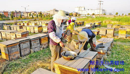 我国是最大的蜂王浆生产国