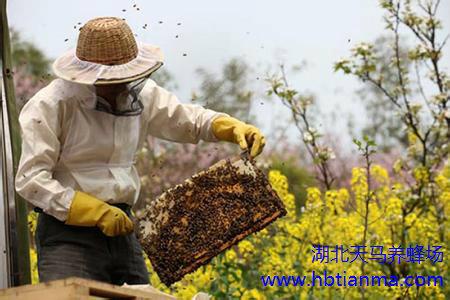 春季宝宝花粉过敏护理全攻略