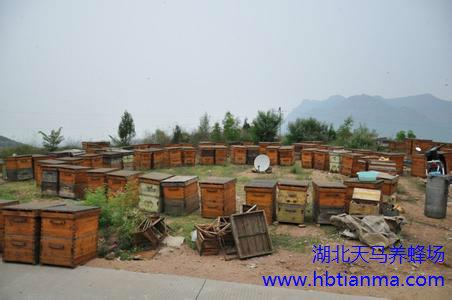 防止蜜蜂逃跑的方法