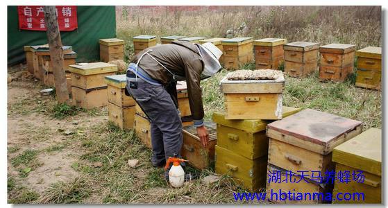 蜂群的排列-蜜蜂的饲养管理