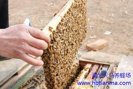 我国的蜜蜂粉源资源