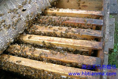 怎样知道发现蜜蜂生病,怎样发现蜜蜂生病了