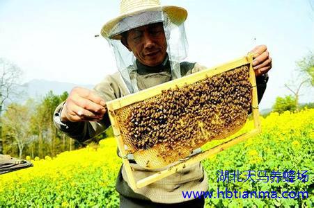液体螨制剂浸布法阶段蜂螨