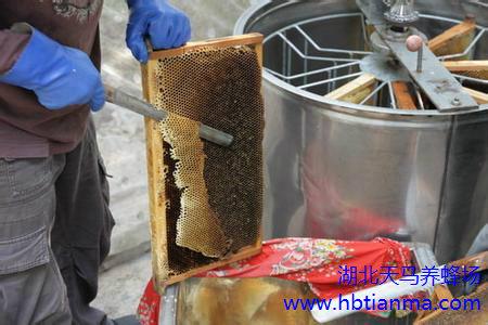 蜂产品误区谈