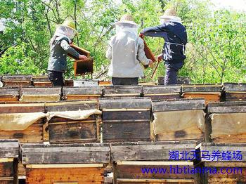 统一蜂花粉质量控制的判断标准