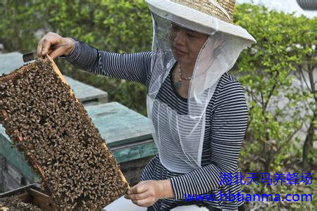 蜜蜂的病敌害防治