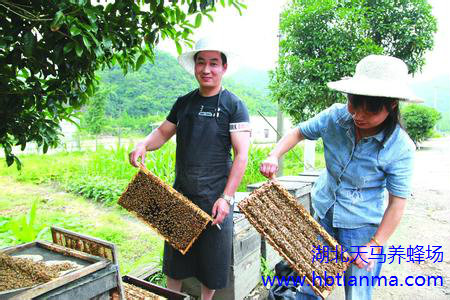 湖北天马养蜂场带您步入蜂产品保健时代