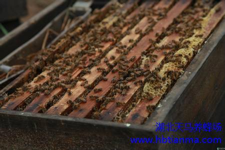 蜂花粉有激素吗 小孩子能吃蜂花粉吗