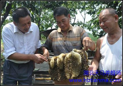 怎样才能预防自然分蜂?