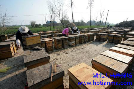 蜂蜜蜂王浆蜂花粉蜂毒蜂胶蜂蜡的生产加工