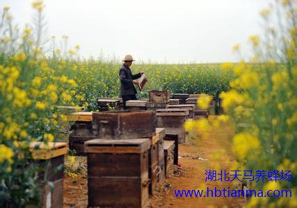 蜂蜡的质量标准,蜂蜡的质量标准