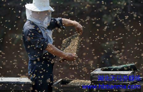 蜂产品基本常识(二)