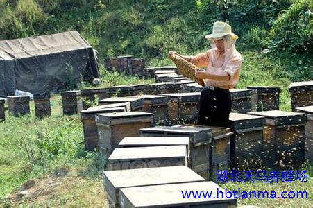花粉对前列腺病的阶段作用