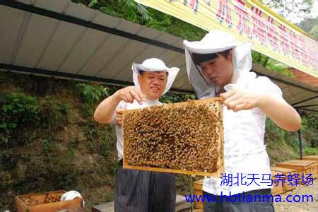 蜂胶液疗效作用