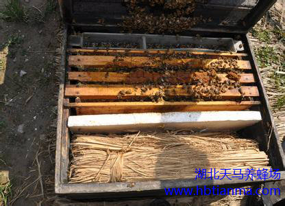 蜜蜂多箱体饲养技术