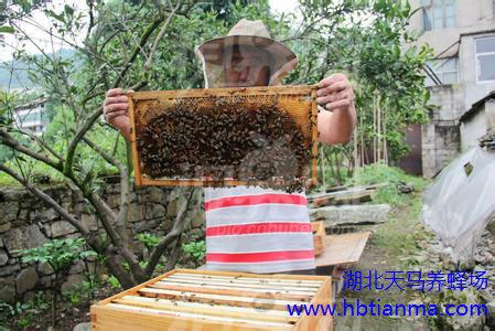 DIY蜂王浆面膜详谈