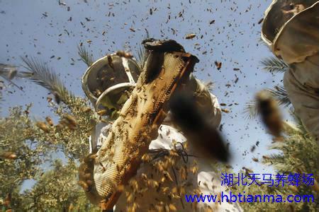 蜂业产业化—中国蜂业做大做强的必由之路
