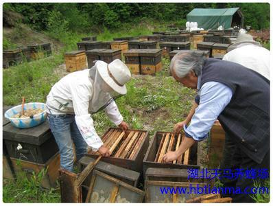 2004年世界养蜂业生产情况
