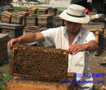 蜂王浆可防治白发