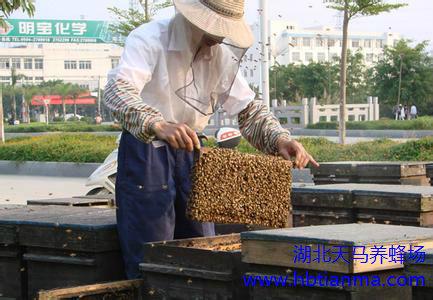 主要蜜粉源植物