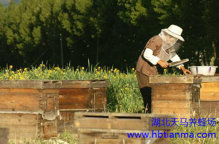 蜜蜂授粉与生态