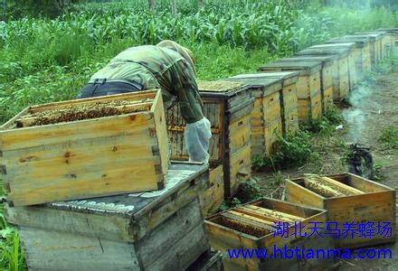 双鸭山饶河县东北黑蜂产品中俄博览会受宠
