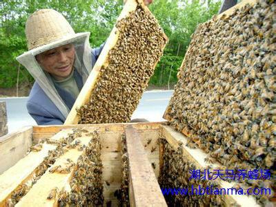 神蜂精临床刮疗手法