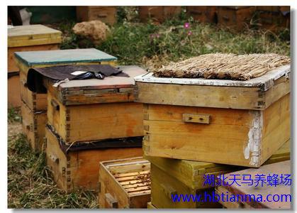 我国主要的蜜源植物种类和花期