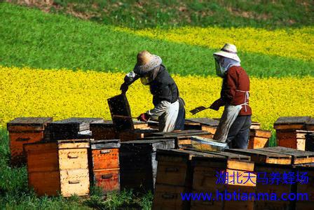 如何用蜂花粉美容