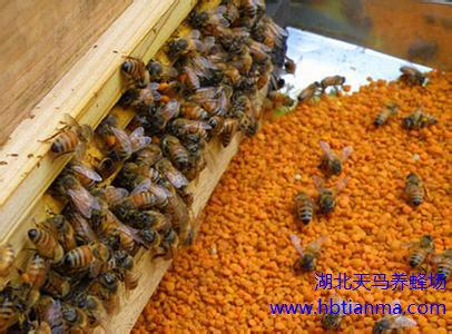 蜂螨的症状和防治方法技巧