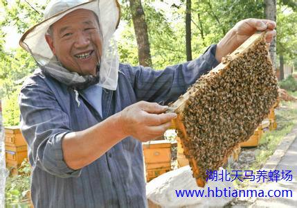 蜂花粉破壁的优缺点
