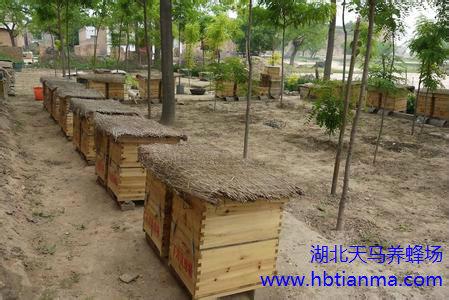 我国养蜂工具发展的简况与方向