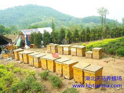 蜂毒肽对自由基的清除作用