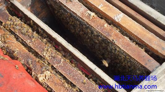 蜂疗用于晚期肝癌综合治疗一例报告