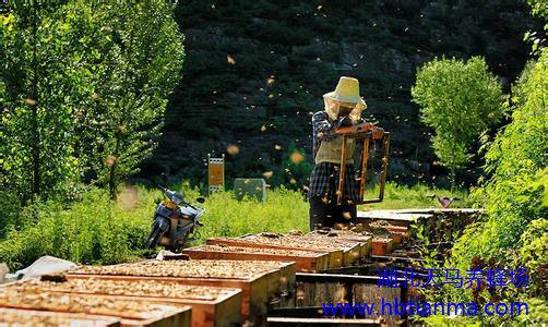 说蜜蜂 蜜蜂的生活方式 蜜蜂的历史